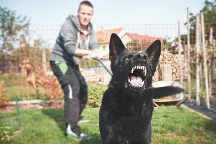 dog-bite-laws-maryland